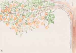 bitter orange_petitgrain