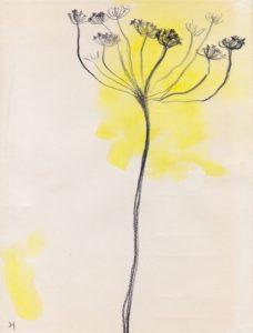 fennel flower1